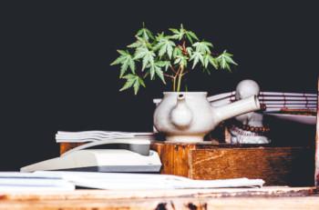 Marijuana Security Plan