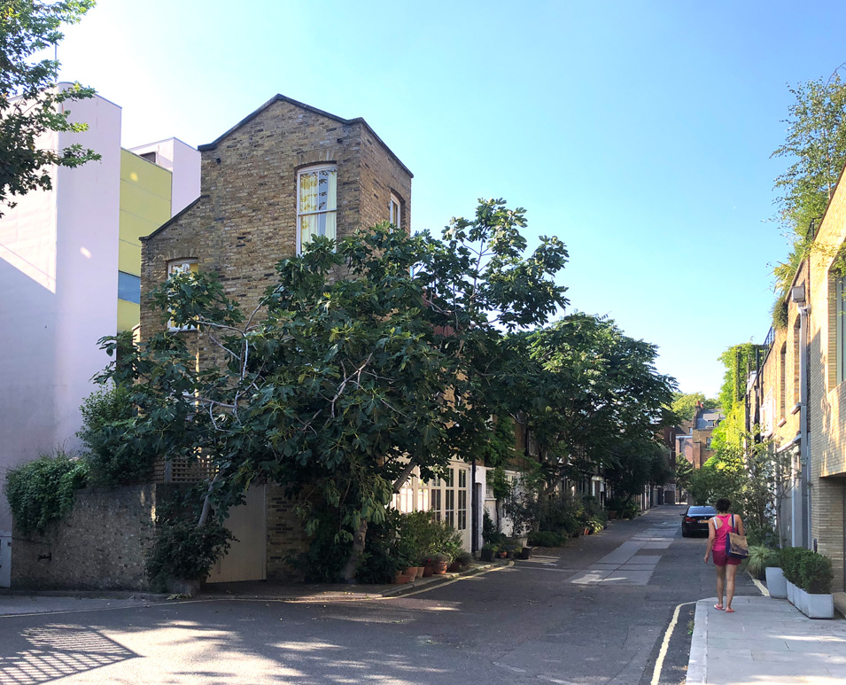 Street view of 29 Doughty mews with fig tree by Ash Sakula Architects
