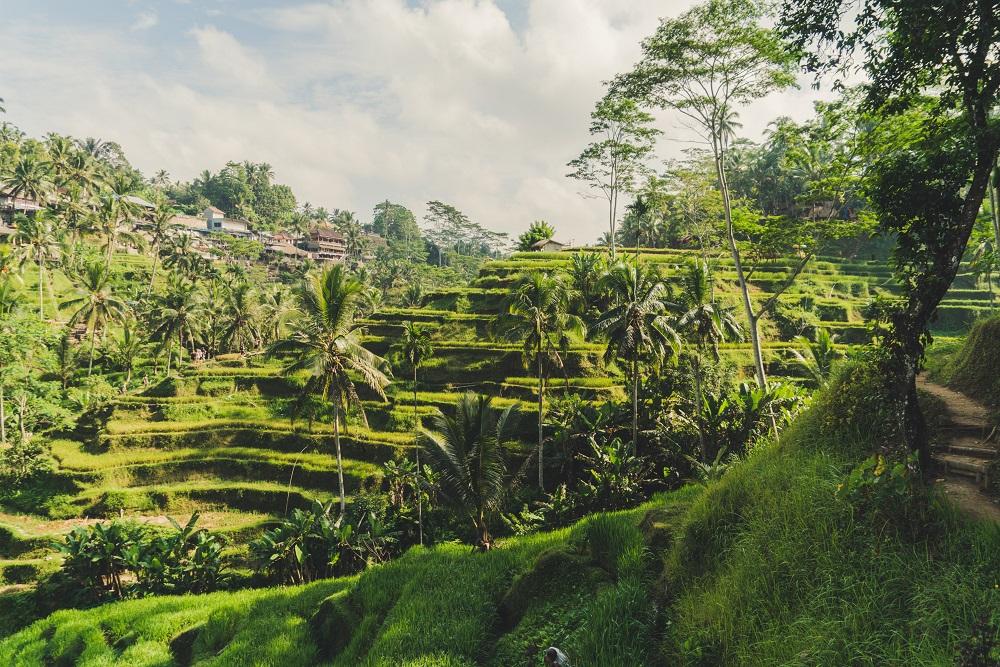 Reisterrassen in Indonesien