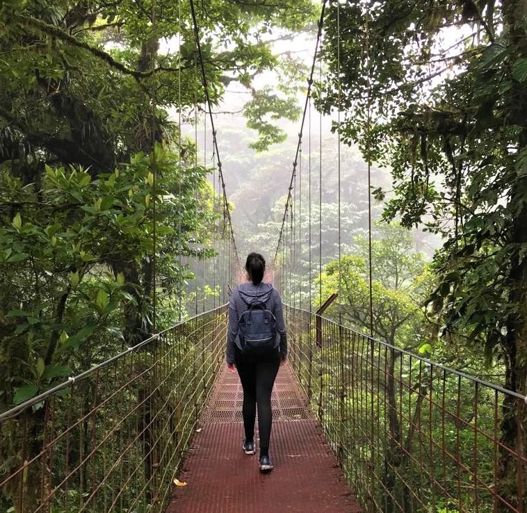 Der Wald in Monteverde