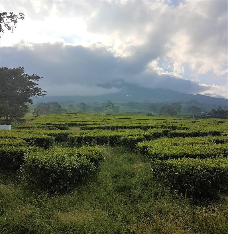 Erlebe die Natur von Indonesien