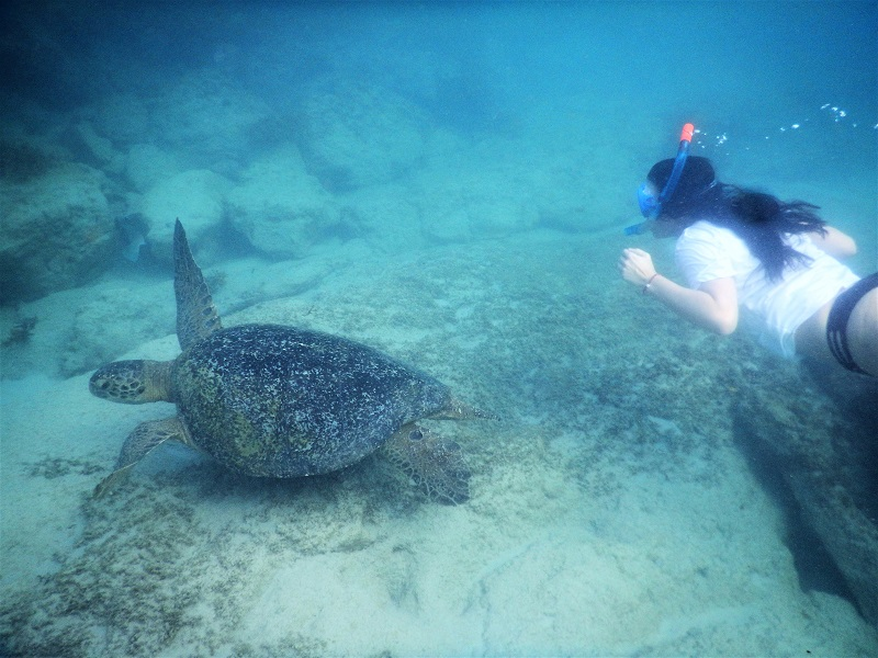 Mit Schildkröten schorcheln