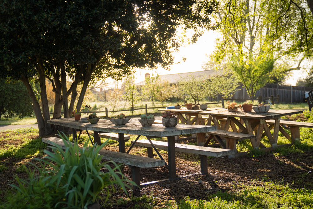 Picnic tables at Soil Born Farms in Sacramento, CA