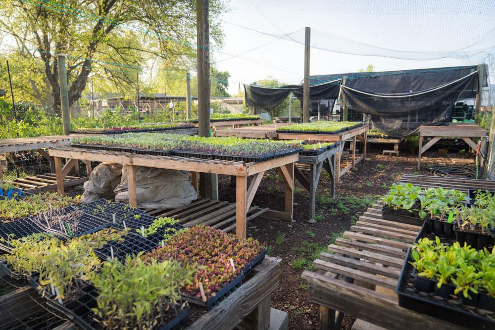 Greens at Soil Born Farms in Sacramento, CA