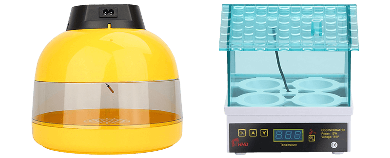 Best Egg Incubators