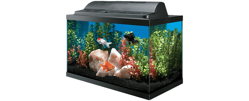 Best Fish Tanks