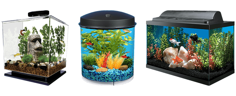 Best Fish Tanks for Goldfish