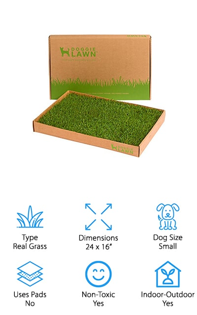 DoggieLawn Grass Dog Potty