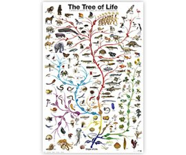 Tree of Life Poster Print