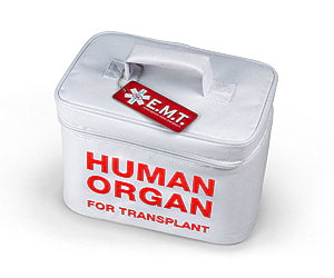 human Organ Lunch Bag