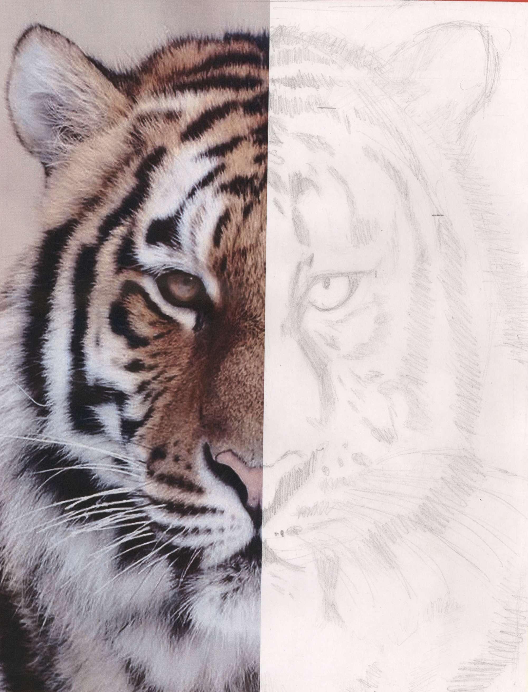 Symmetrical Safari