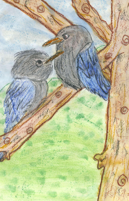 Kookaburras Laugh in the Old Gum Tree