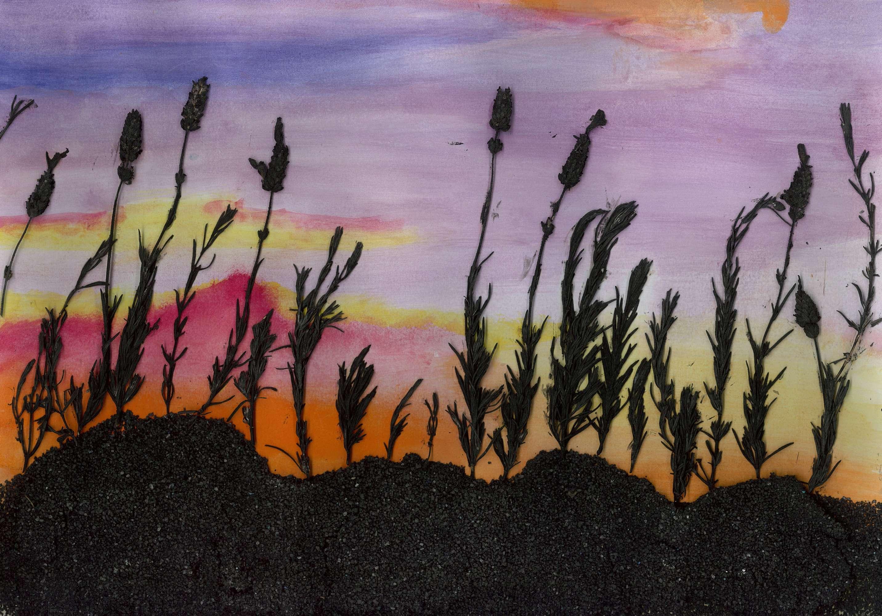 Pastel Wheatfields
