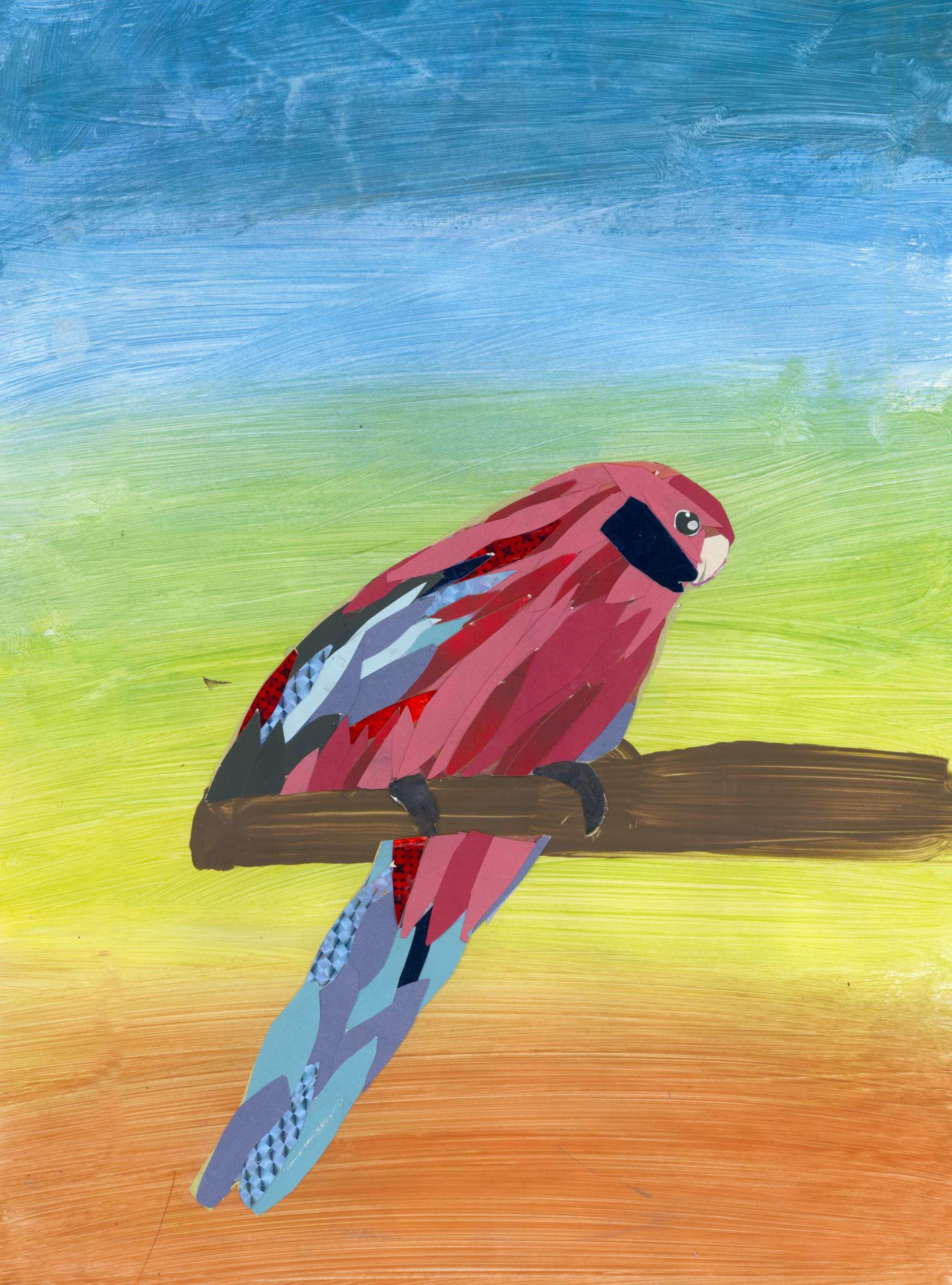 Native Australian Bird