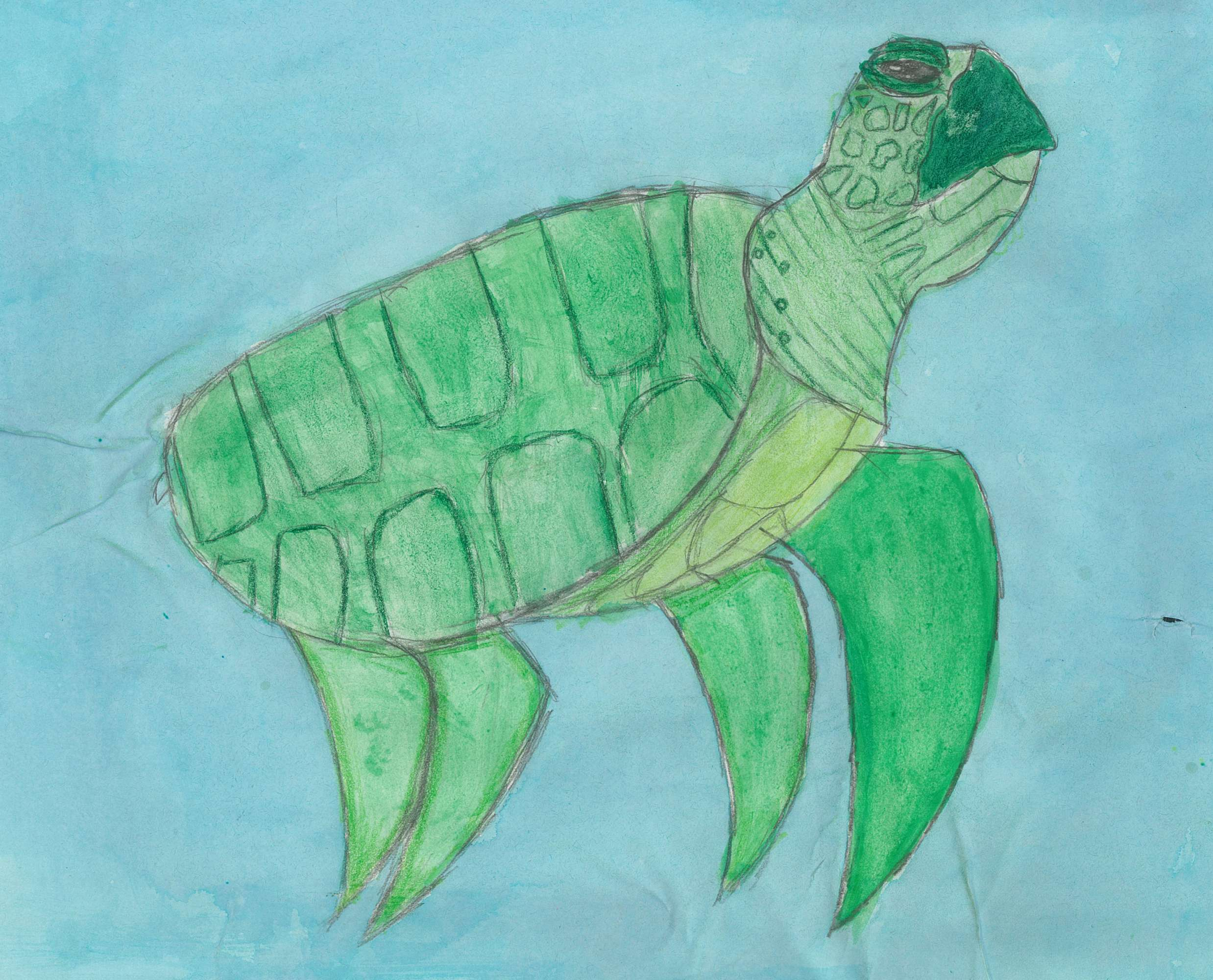 The Details of the Turtle