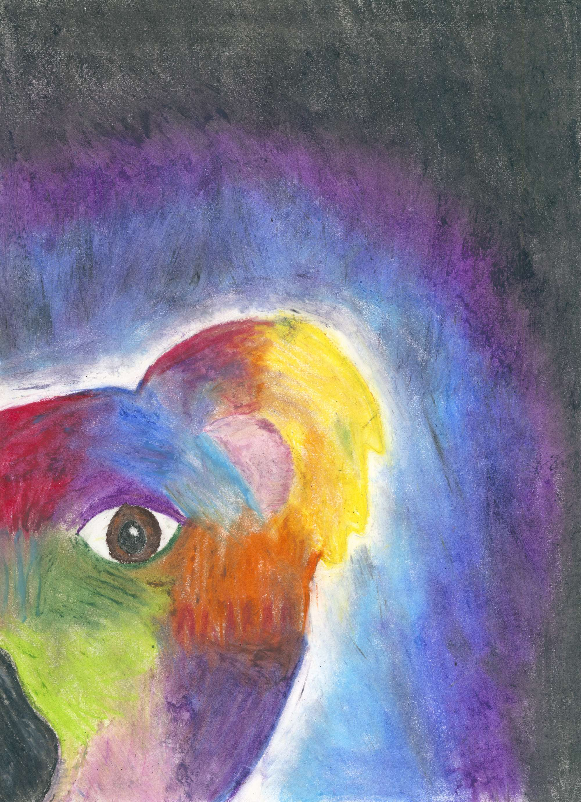 Operation Art 2021 – 210285 – Will Markwort – Colourful Koala