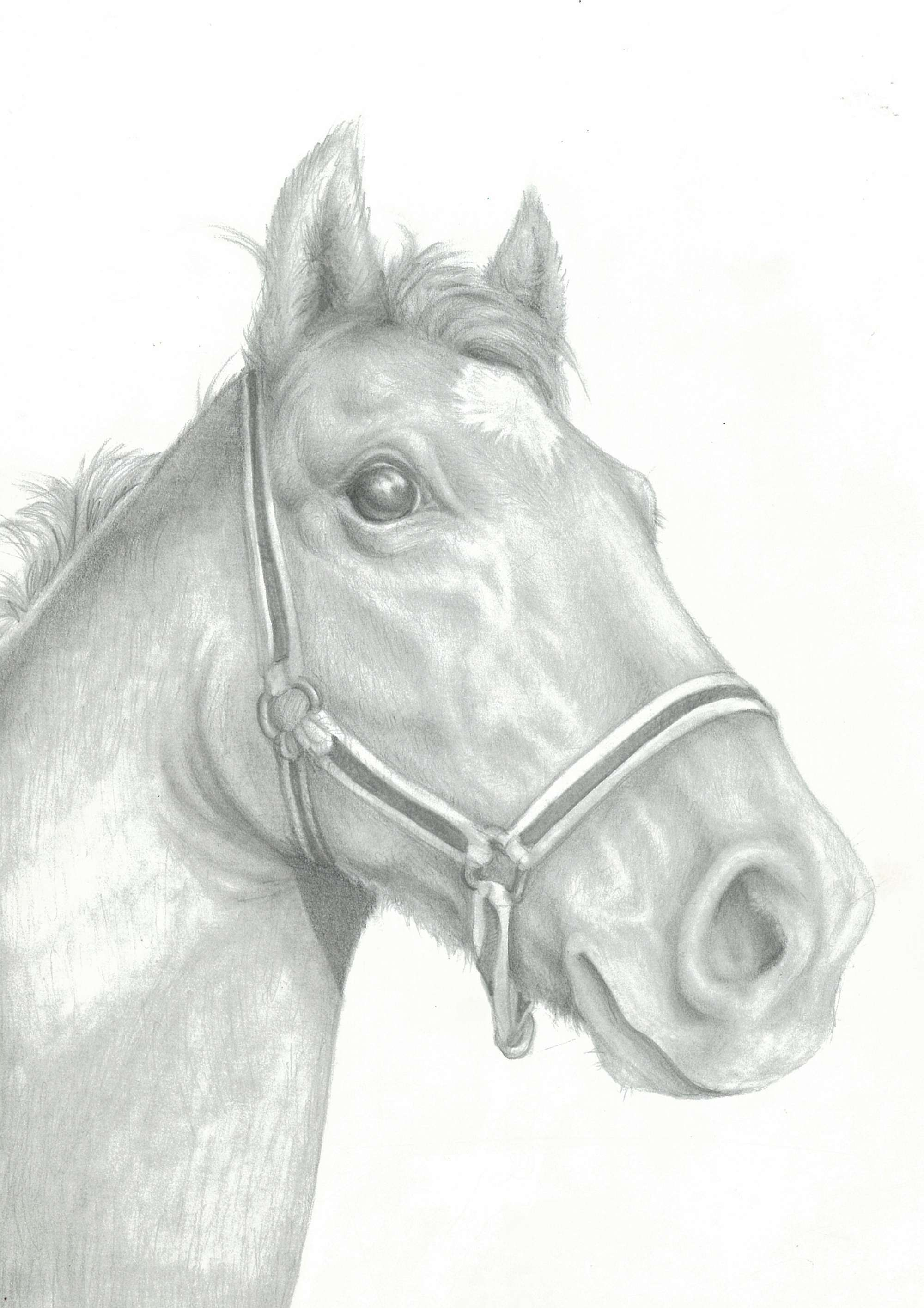 The Rescue Brumby