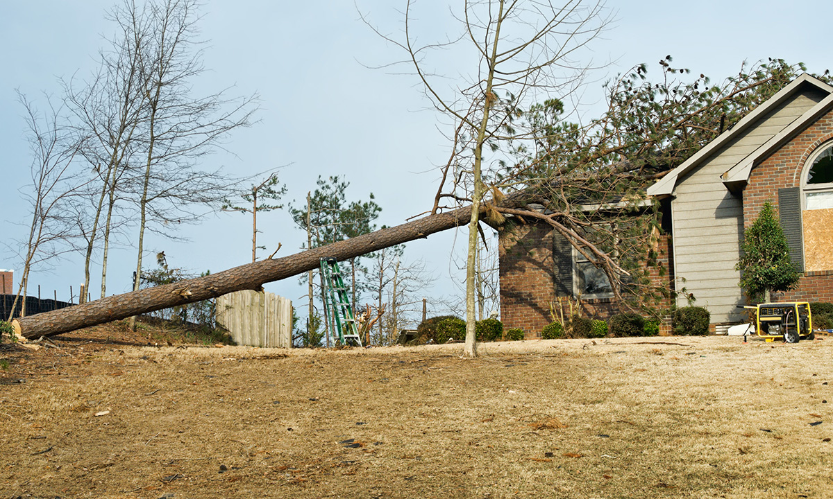 large tree that has fallen and caused damage to a home's roof