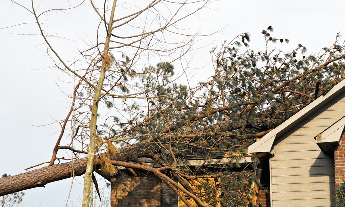 damaged roof from fallen tree