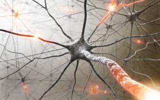 Comment évaluer les dysfonctionnements sexuels au cours des maladies neurologiques ?