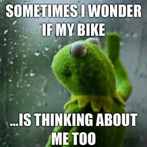 Muppet frog looking through window