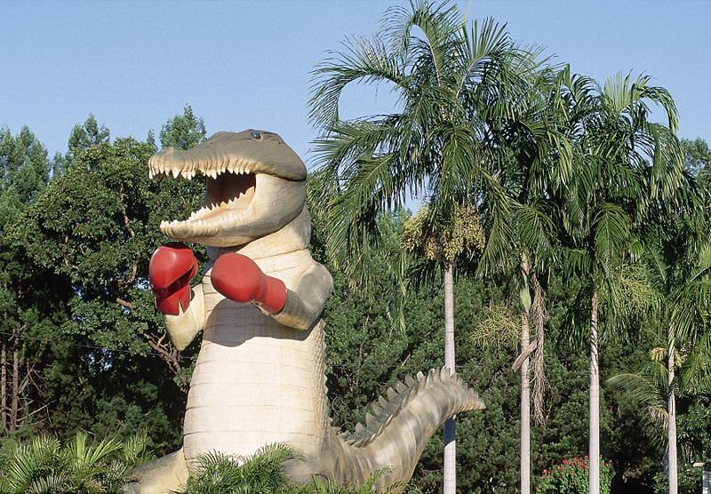Big Boxing Crocodile in Humpty Doo, NT, Australia