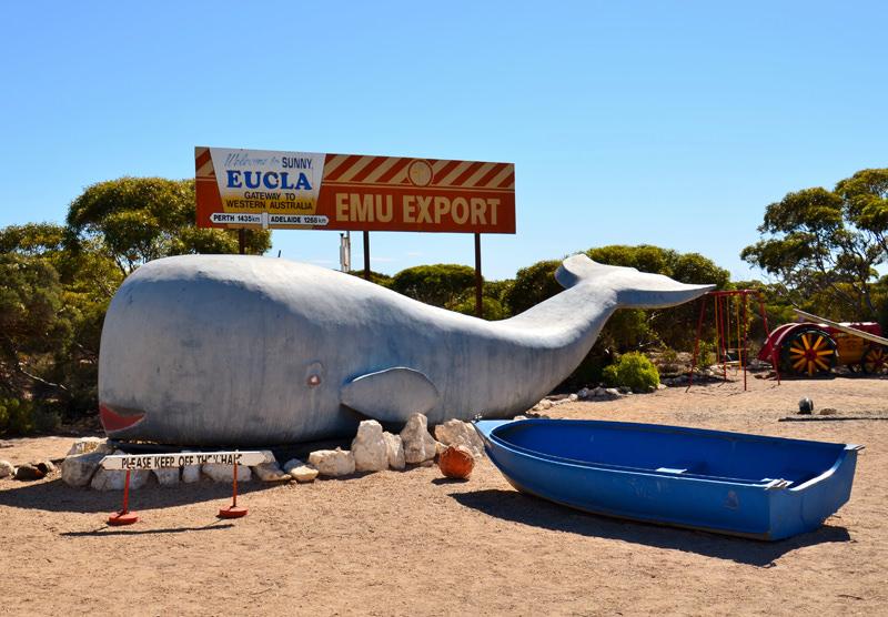 Leeuwin Way Whale in Eucla, Western Australia