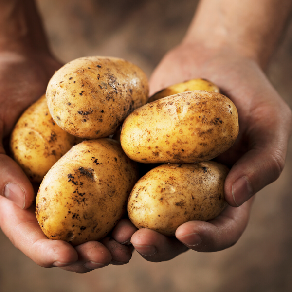 Potatoes - Maris Piper - grown at Smeaton in East Lothian (5kg bag)