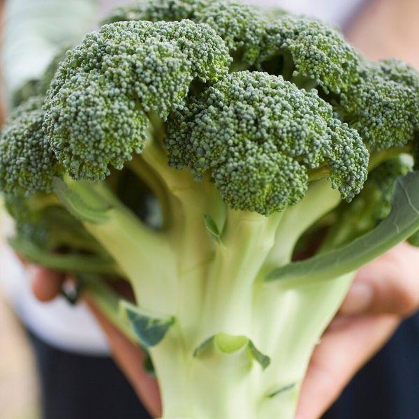 Broccoli (average weight 500g)