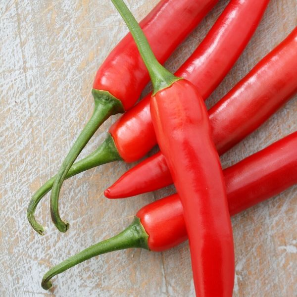 Chillis - Dutch Red