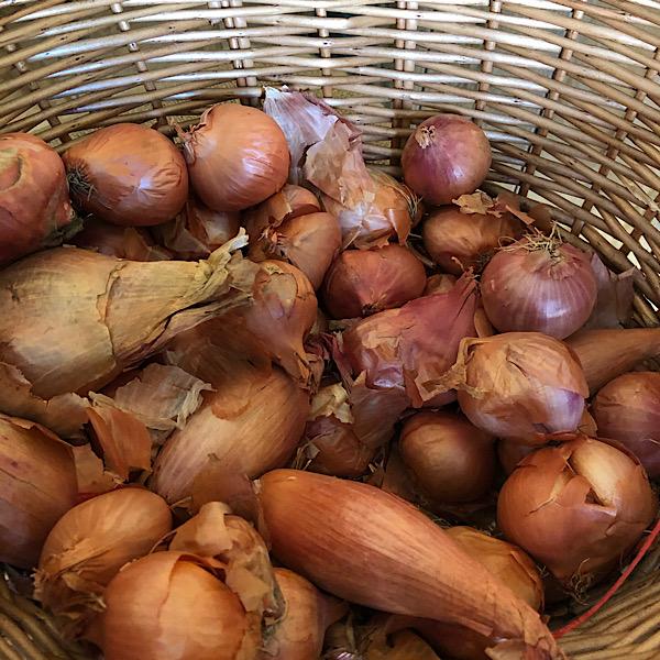 Onions - shallots (per kg)