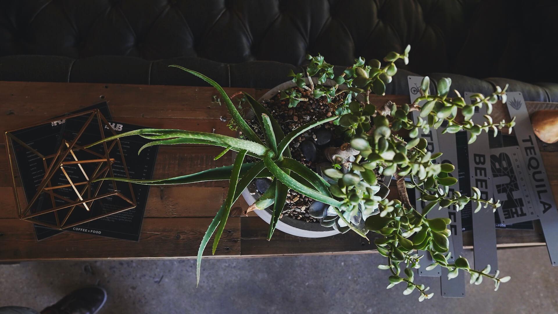 plant vibe