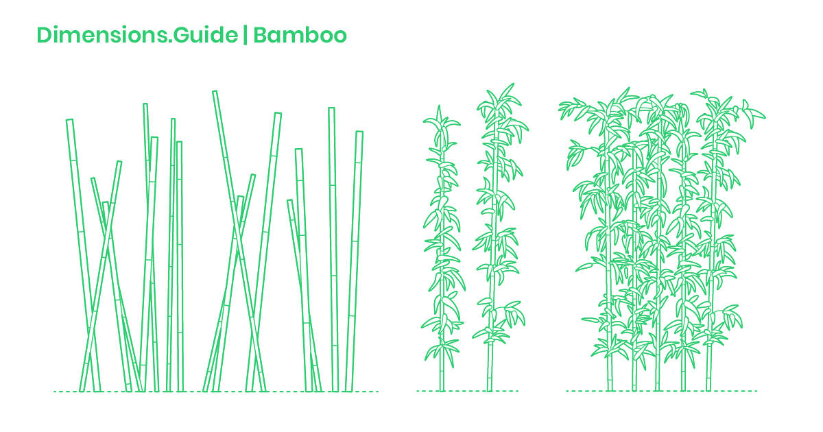 Bamboo Dimensions & Drawings | Dimensions Guide