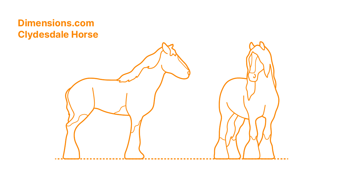 Clydesdale Horse Dimensions Drawings Dimensions Com