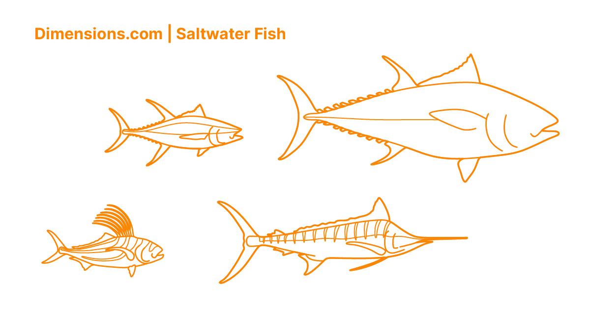 Saltwater Fish Dimensions Drawings Dimensions Com