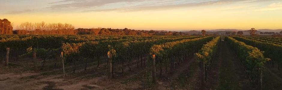 ブドウ畑とワイン造りのマリアージュ
