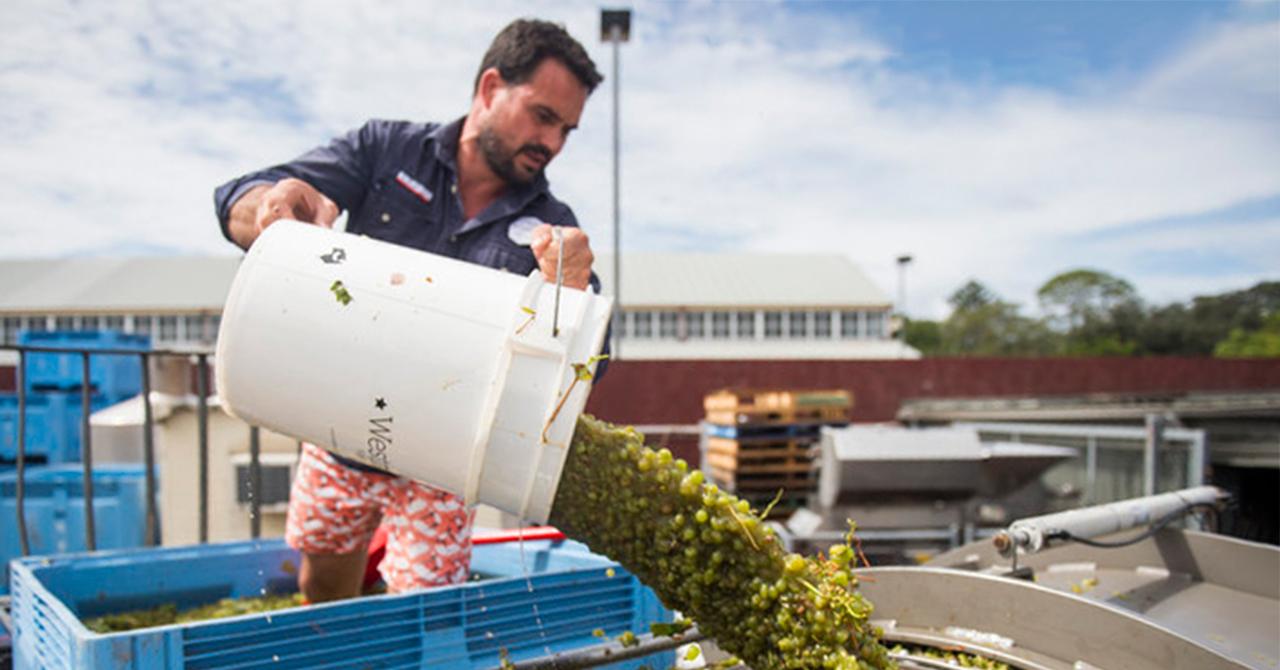 シドニーで唯一の醸造家