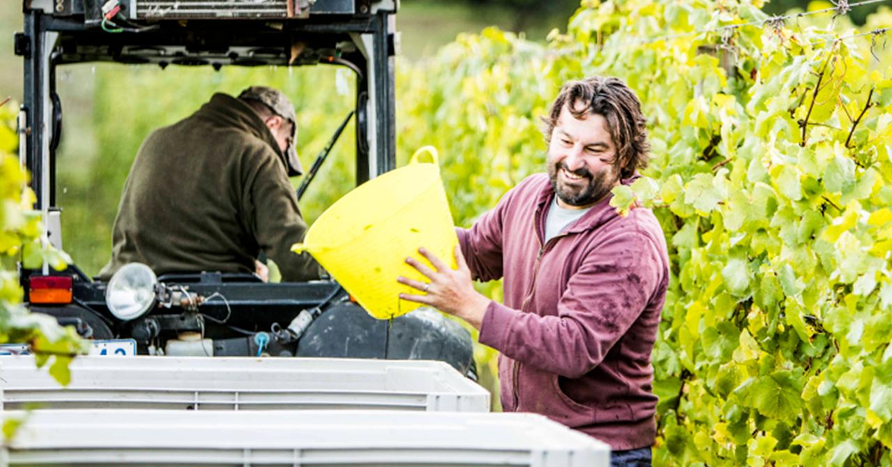 伝統と近代の技術が調和したブドウからワインまでの道筋