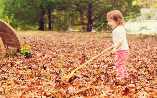 5 Fall Lawn Care Tips You Need To Know Canopy Lawn Care Raleigh, Durham, NC