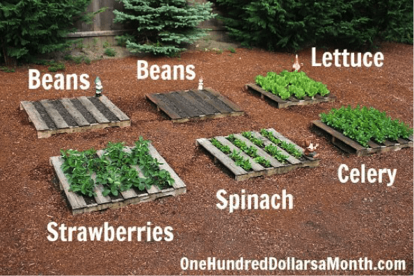 Pallet Gardens - 5 DIY Pallet Ideas Canopy Lawn Care Raleigh, NC