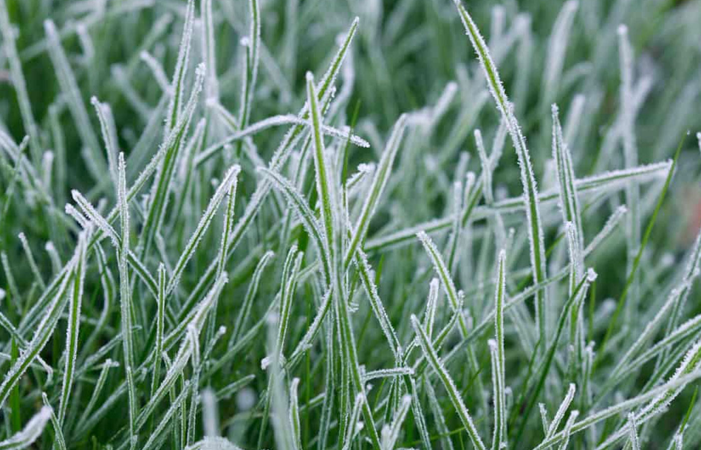 Can Frost Damage Your Lawn