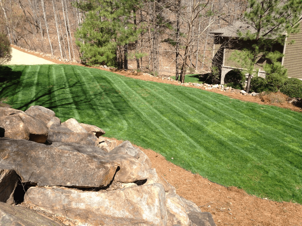 Fescue in March Canopy Lawn Care North Carolina