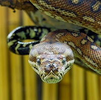 Snake Safety & Awareness, Construction