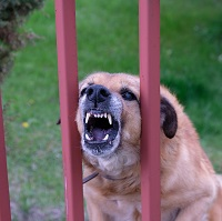 Weeklysafety.com exclusive safety meeting topic that provides tips on occupational dog bite safety for construction workers who regularly work in residential neighborhoods where aggressive dog encounters might be a concern on the job.