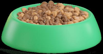 Best Dry Dog Food