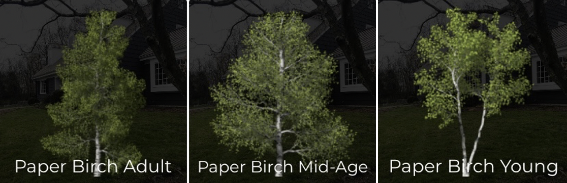 iScape birch trees