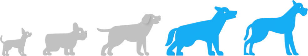 Dog Breed Size