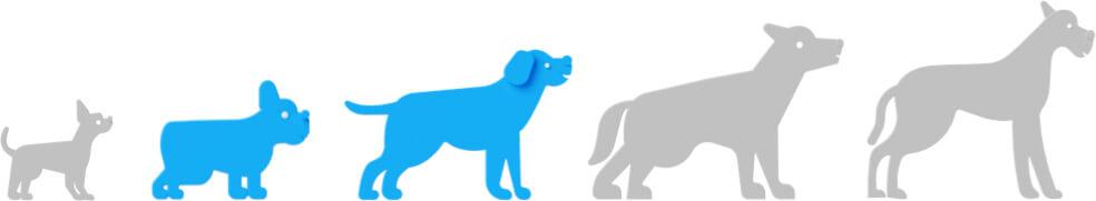 Dog Breed Size