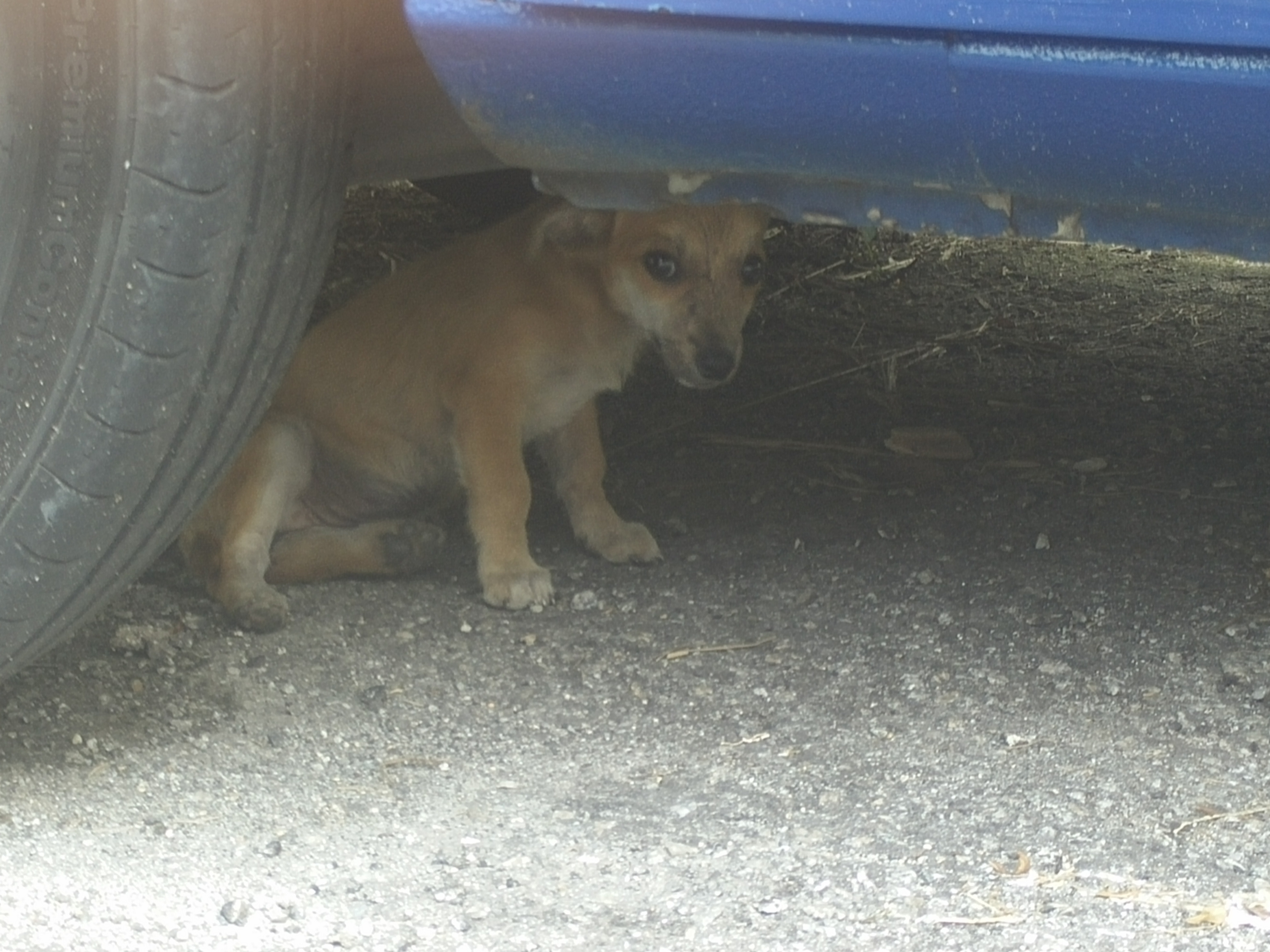 Abandoned puppy