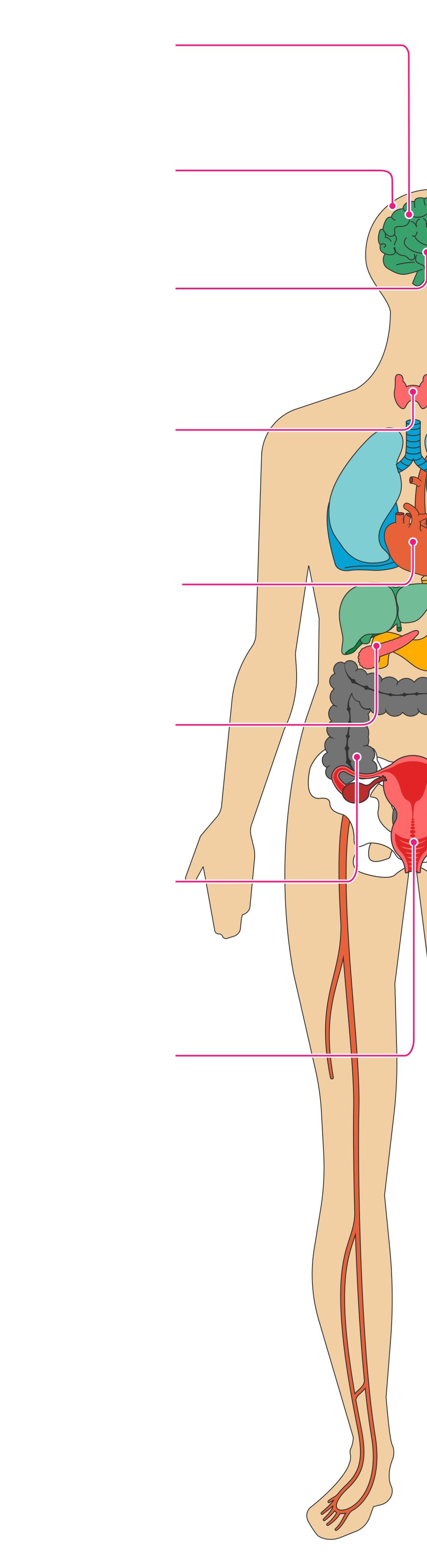 prevalent hashimoto's symptoms